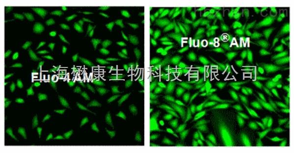Fluo-8 AM 鈣離子熒光探針係列