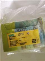 Bio-Rad伯乐iQ SYBR Green Supermix超混液12.5ml